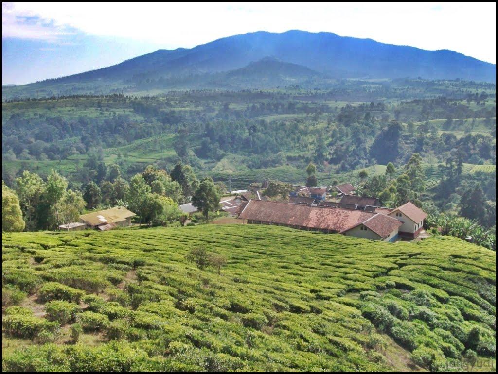 Xplore Indonesia l Xplore Gunung l Xplore Adventure: Gunung Kendang