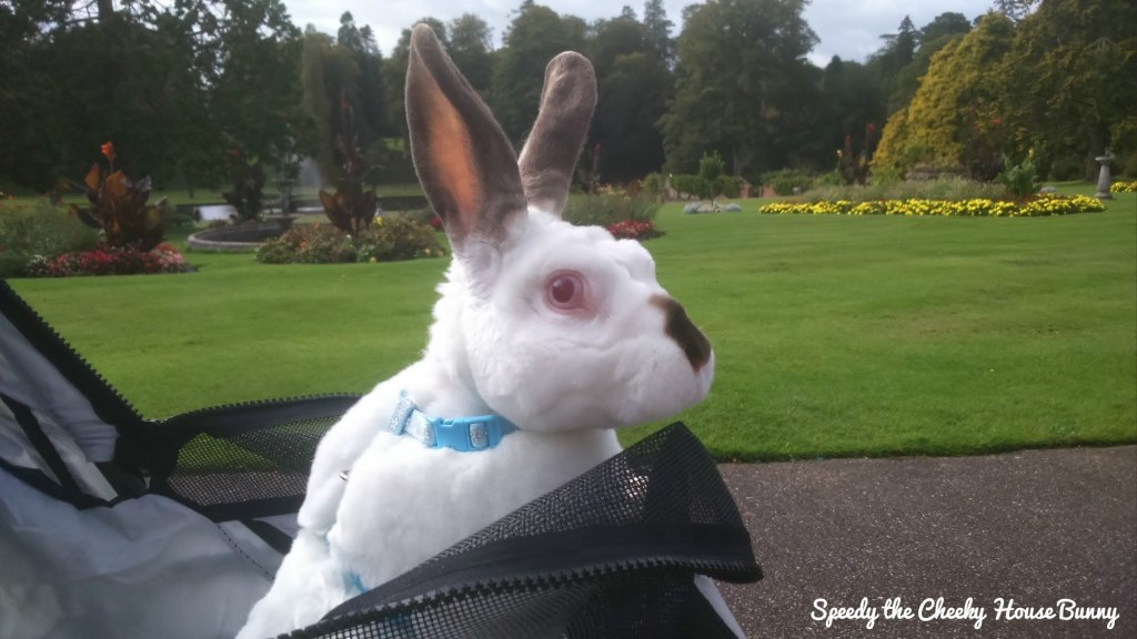 Sunday Bunny Blogging >> Speedy The Cheeky House Bunny An Exciting Blogging And Travel