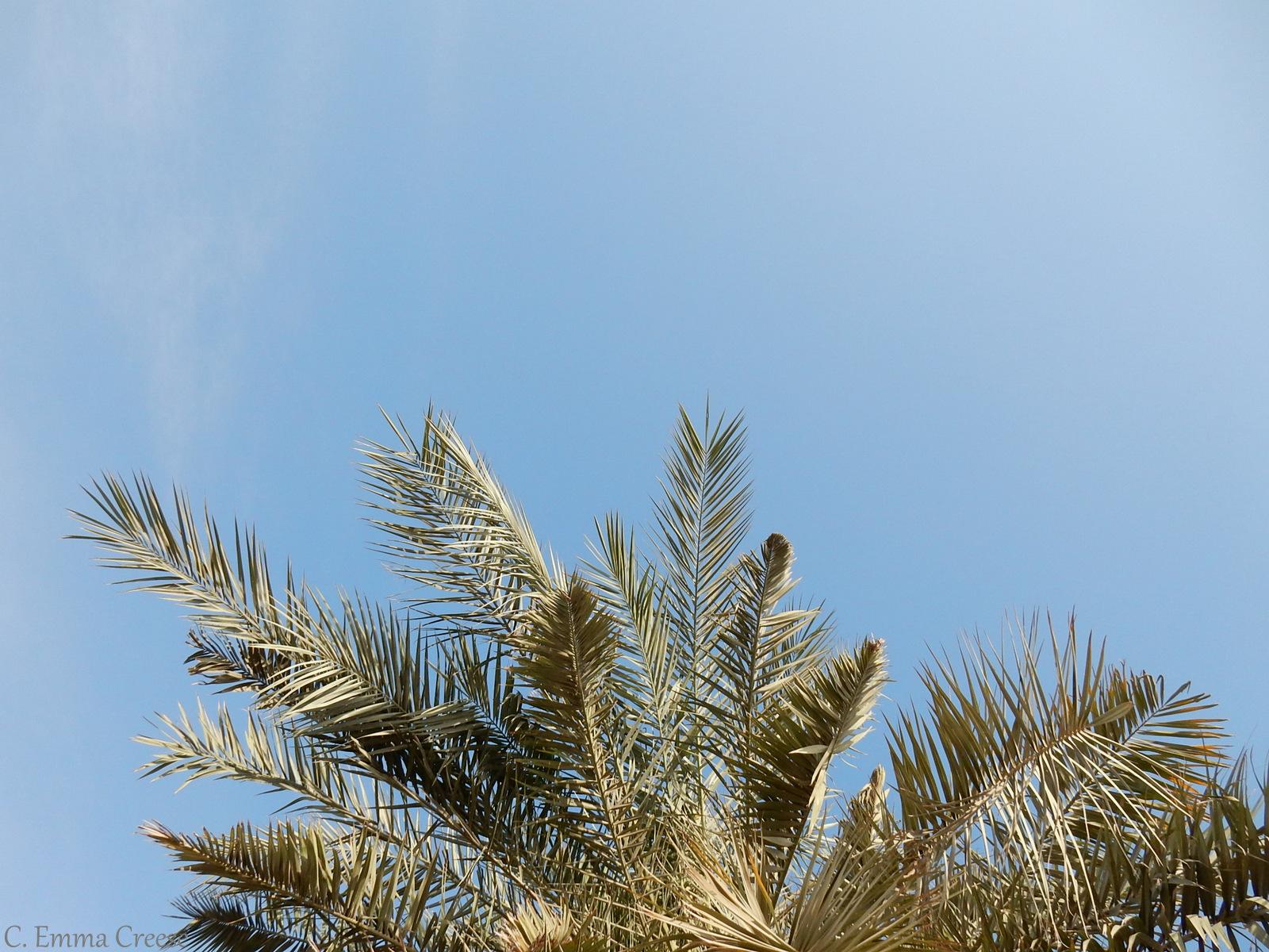Overnight in the Dubai Desert like a Bedouin
