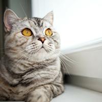 La stérilisation chirurgicale chez le chat : pour ou contre ?
