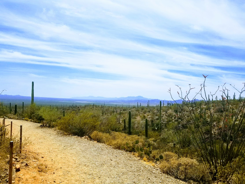 sonora desert museum landscape