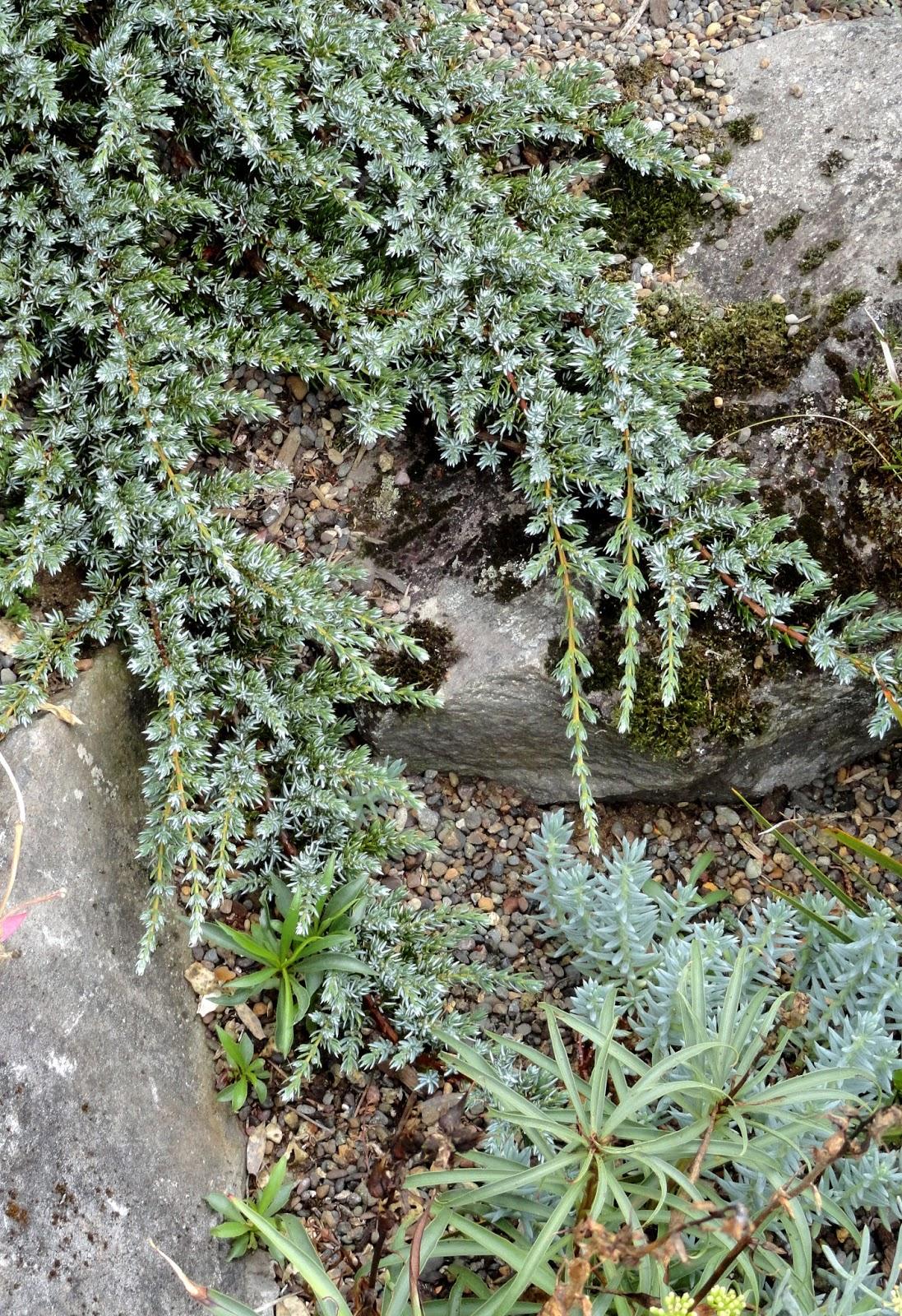 Danger Garden Garden Visit Greg Shepherd Of Xera Plants At Home