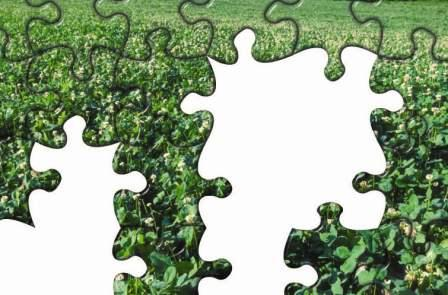 Whitetail Institute The Qdm Puzzle What Is Your Situation
