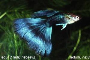 Half Black Medium Blue