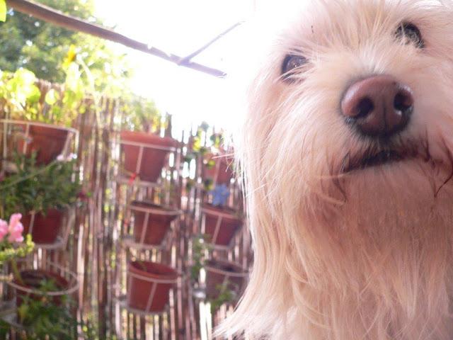 Mina wie gehe ich auf einen fremden Hund zu Verhalten Kind Erwachsener