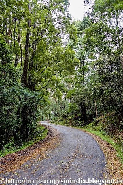 Berijam Lake Road Kodaikanal