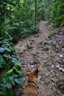 dog on trail in Costa Rica