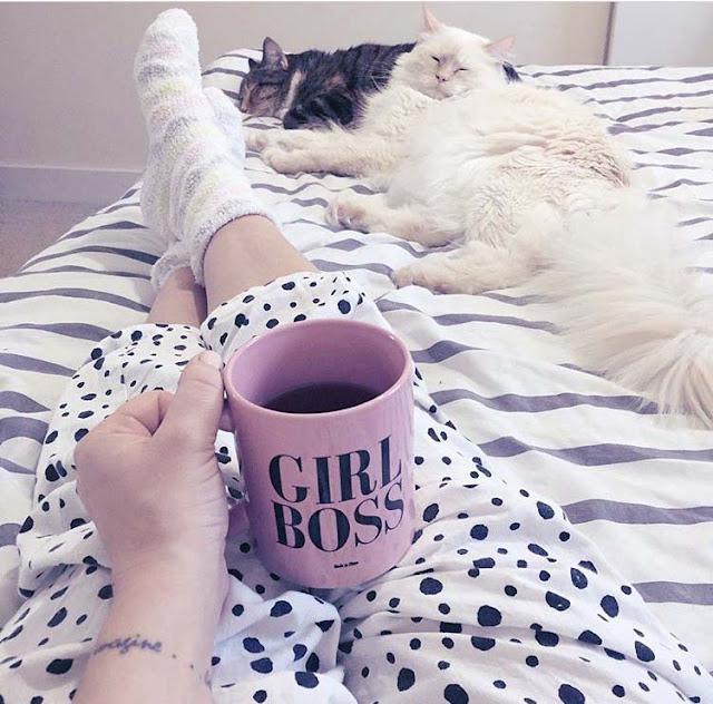 girlboss pet cat sitting business