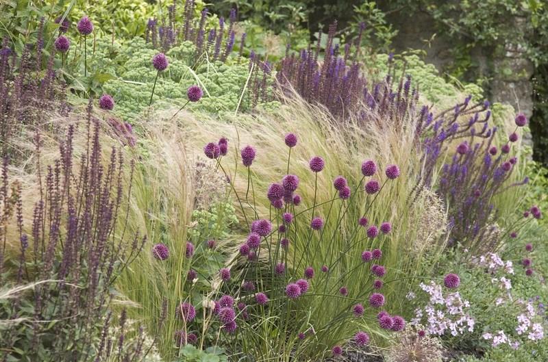jardin de estilo naturalista con allium, gramineas y otras plantas vivaces