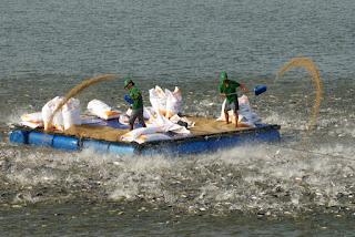 thức ăn thủy sản nhập khẩu