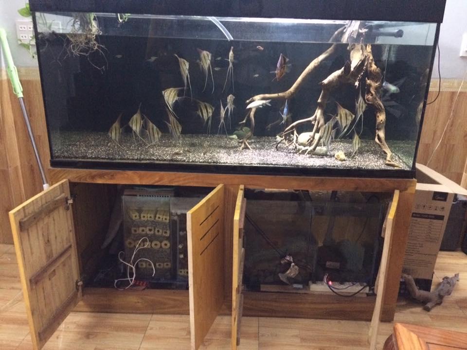 Lọc tràn dưới trong 1 bể nuôi cá cảnh