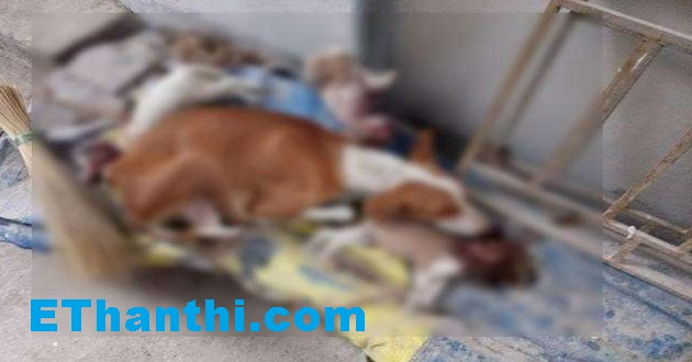 நாய் குரைத்ததால் குட்டிகளைக் கொன்ற இளைஞர் | A young boy killed by a dog !