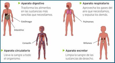 Resultado de imagen de aparatos de la nutricion