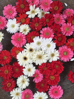 fleurs kerala inde