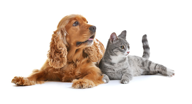 A cute dog and cat look expectant for their reward