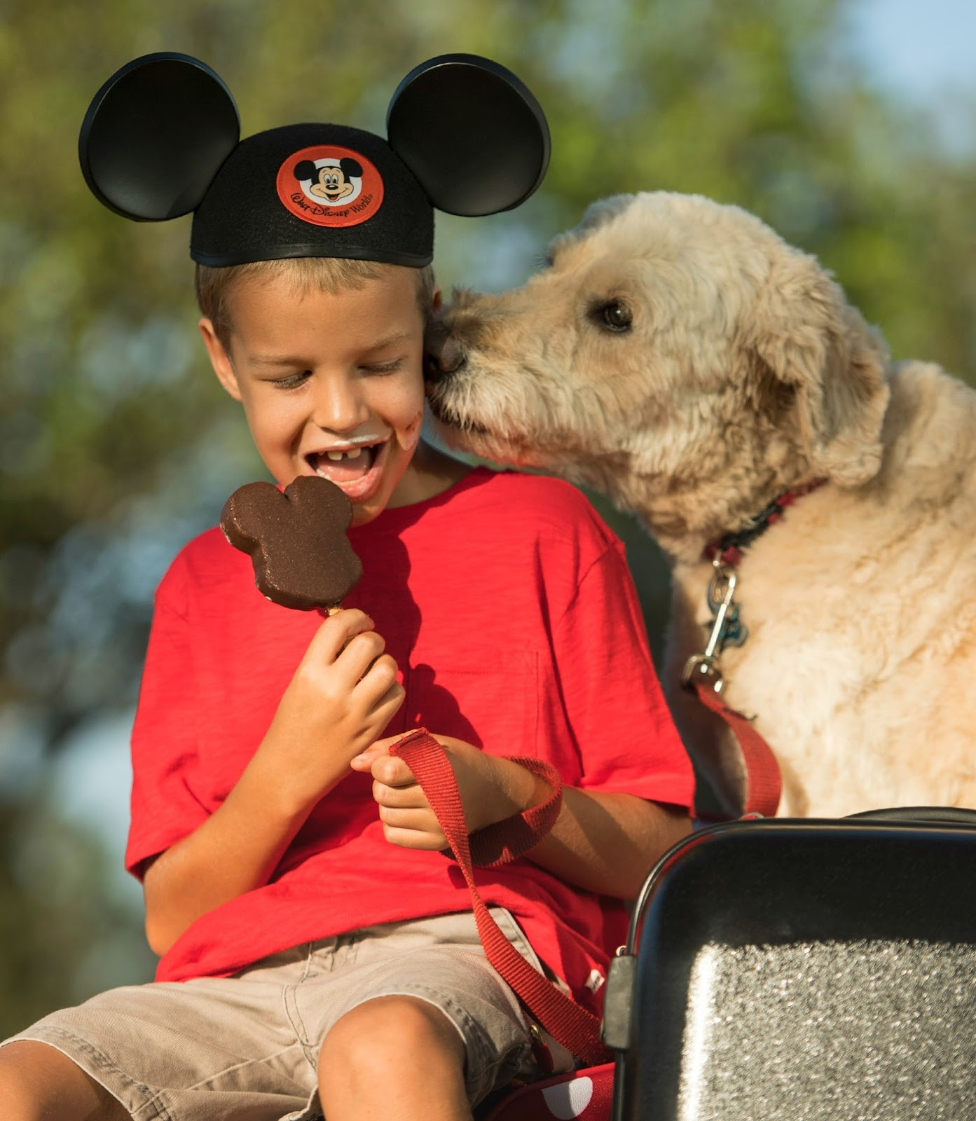 Select Walt Disney World Hotels Welcomes Guests and Their Dogs