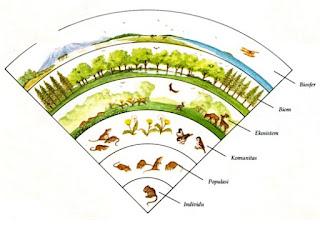 Satuan Satuan Ekosistem