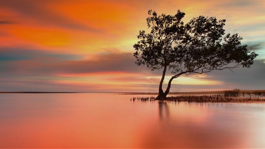 River, Mangrove, Nature, Scenery, Sunset, 4K, #6.957