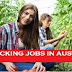 Fruit Packing and picking Jobs In Australia 2018