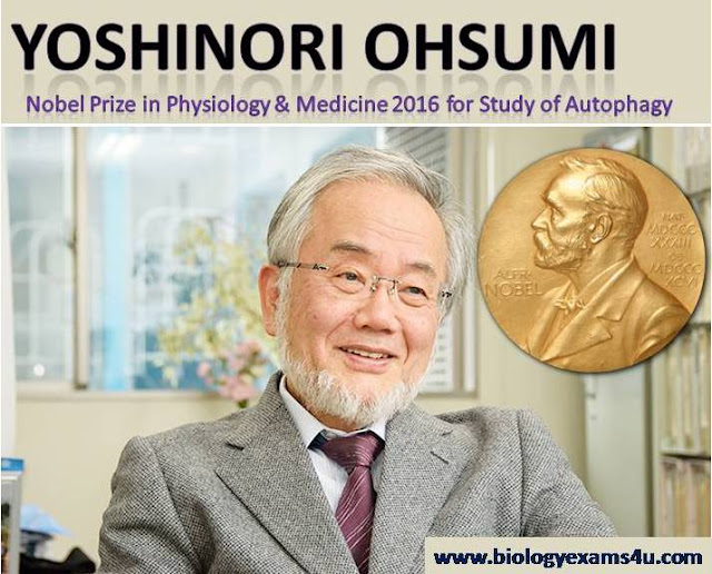 Nobel prize 2016 physiology and medicine Yoshinori Ohsumi
