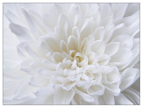 Фото Белый цвет осени - фотограф Sergey Khandogin.
