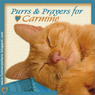 Purrs and prayers badge for Carmine