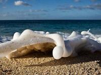Peliharalah 7 Kalimat Ini, Dosa Sejumlah Buih Lautan akan Diampuni