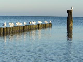 Die Ruhe nach dem Weihnachtssturm - Der Strand von Ückeritz / Insel Usedom