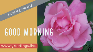 Good Morning Words with Pink Rose flower Image