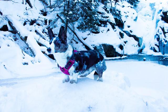 wodospad szklarki, karkonosze z psem, z psem w góry