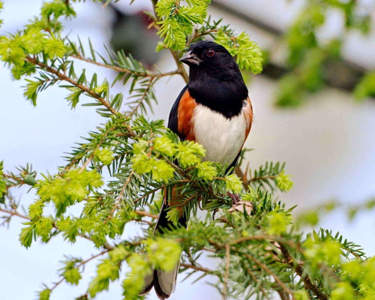 Lovable images birds wallpapers free download - Hd birds images download ...