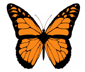 Butterfly poem in Hindi