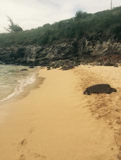 Observer les tortues à Maui