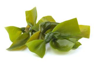 Sea Kelps