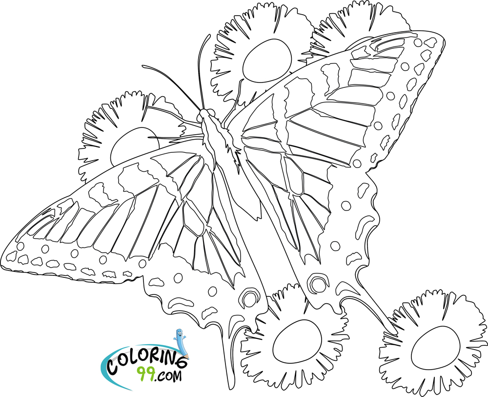 Butterfly Coloring Pages Team Colors