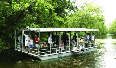 Best Swamp Tours New Orleans