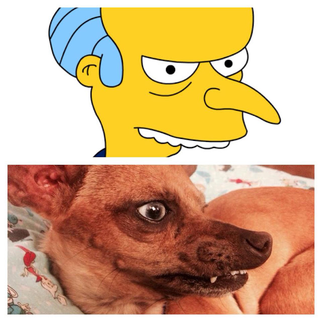 A dog like a caracter in simpsons