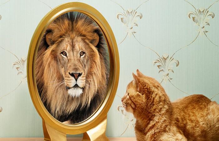 تطوير الذات وعلم النفس