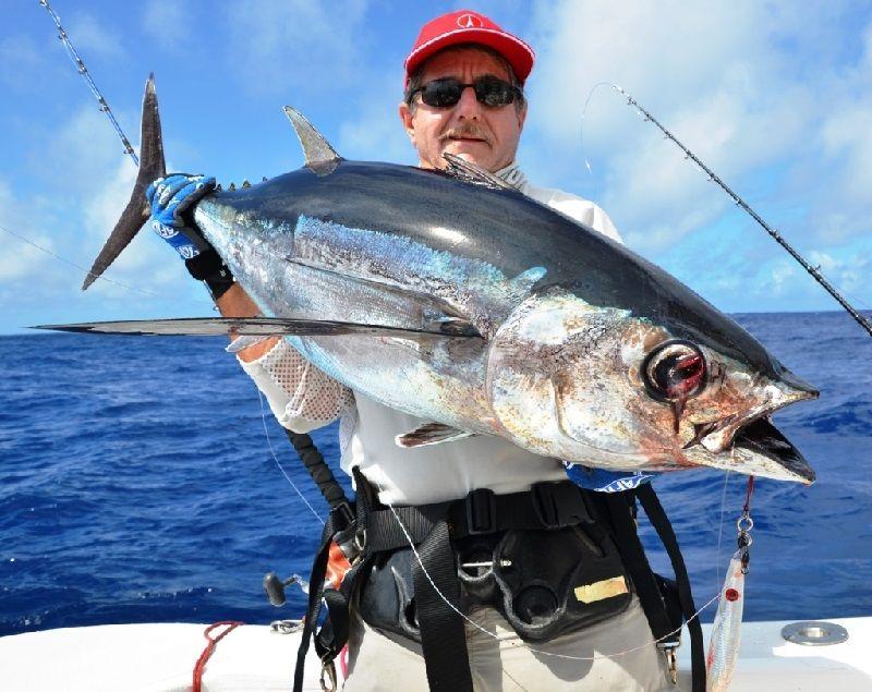Gambar Jenis Ikan Tuna-Ikan Tongkol Abu-Abu (Thunnus tonggol)