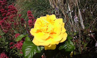 and roses are yellow!!