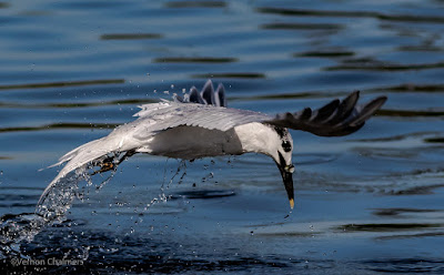 Birds in Flight Photography Workshop Cape Town - February 2017