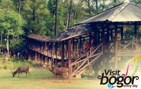Wisata Hits di Bogor : penangkaran rusa giri jaya