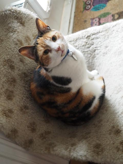 Poppet Cat