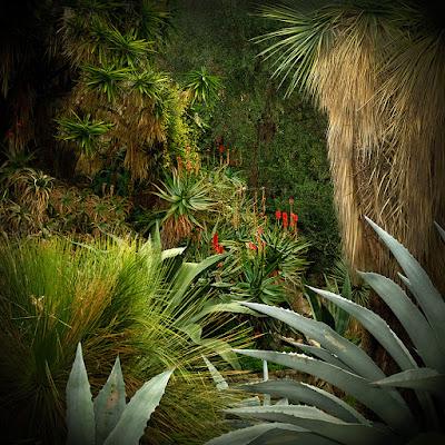 olivia, lavergne, nature, végétation, bio, écolo, cop22