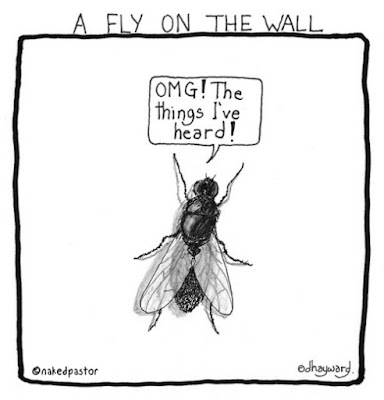 Image result for FLY on the wall