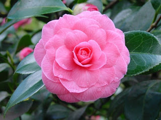 toko-bunga-surabaya-sukis