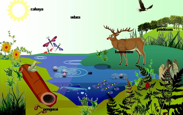Komponen Biotik dan Abiotik dalam Ekosistem | Ekosistem ...