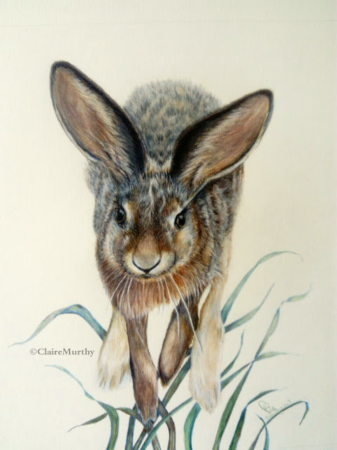 Wildlife Art : Hare Painting