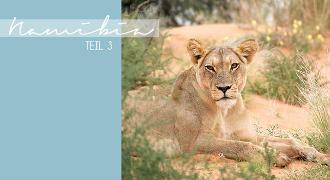 Ynas Design Blog | Heute nun der dritte Teil der Namibiareise