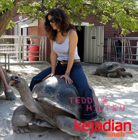 Jual Kura Kura Aldabra